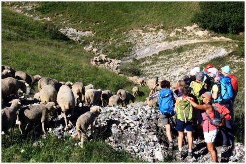 Lac d'Arsine 30-07-19 (13)